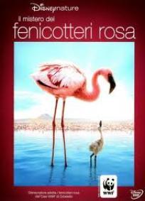 Grande Balé Vermelho - O Mistério dos Flamingos