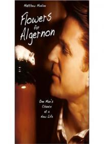 Um Amigo Para Algernon (2000)